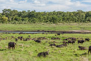 101231_Hwange_National_Park_013.jpg