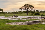 101231_Hwange_National_Park_022.jpg