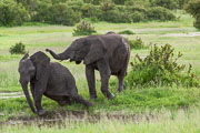 101231_Hwange_National_Park_030.jpg