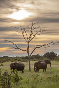 101231_Hwange_National_Park_035.jpg