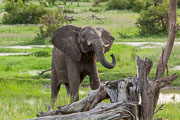 101231_Hwange_National_Park_039.jpg