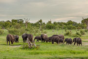 101231_Hwange_National_Park_051.jpg