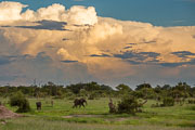 101231_Hwange_National_Park_056.jpg