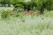 110102_Hwange_National_Park_001.jpg