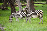 110102_Hwange_National_Park_005.jpg