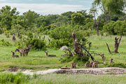 110102_Hwange_National_Park_046.jpg
