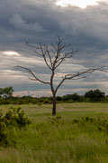 110102_Hwange_National_Park_072.jpg