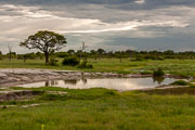 110102_Hwange_National_Park_076.jpg