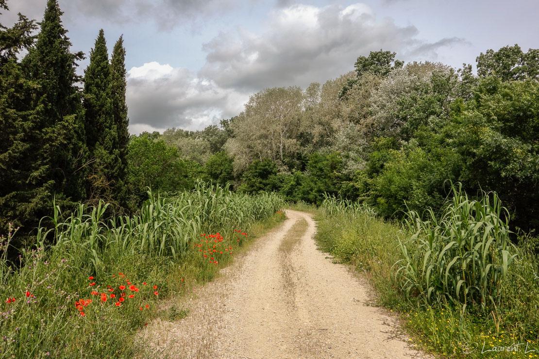 Etape 13 : Arles nord ↔ Saint Gilles (25,7 kms)  |  06/05/2014 - 12:08  |  Je décide d'emprunter une variante de la route d'Arles vers Saint Jacques-de-Compostelle (distant de 1550 kms) : mes hôtes de la veille m'ont conseillé la digue du Petit Rhône plutôt que la route classique (GR653), sur bitume à cet endroit. Je marche donc sur cette digue sur plus de 15 kms et pas de doute, je suis bien en Camargue, les moustiques sont au rendez-vous. Le soir à Saint Gilles, je rencontre pour la première fois depuis mon départ d'Antibes quelques pélerins dans ce sympathique gîte. J'en rencontrerai désormais tous les jours : le chemin d'Arles est la deuxième route la plus empruntée après celle du Puy.